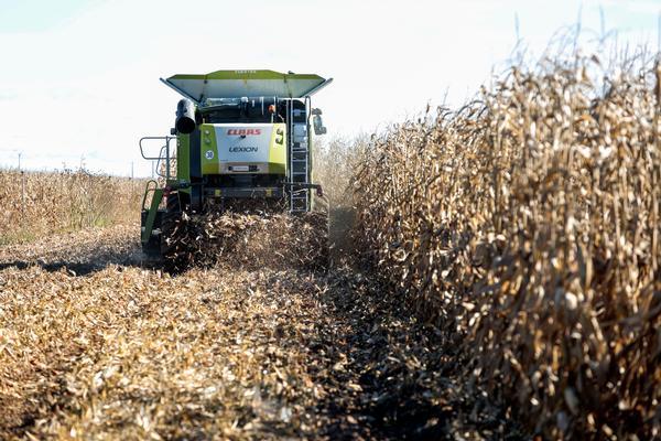 La provincia de León presentará los mejores resultados en la cosecha de maíz el año que el cultivo es injustamente atacado por la nueva PAC