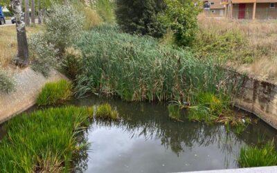 Los populares recuerdan que el río Jerga sigue sin adecuarse dos años después de la petición de los padres y madres del colegio La Salle